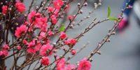 Chùm 17 bài thơ đặc sắc của tác giả Nguyễn Thị Kim Lan